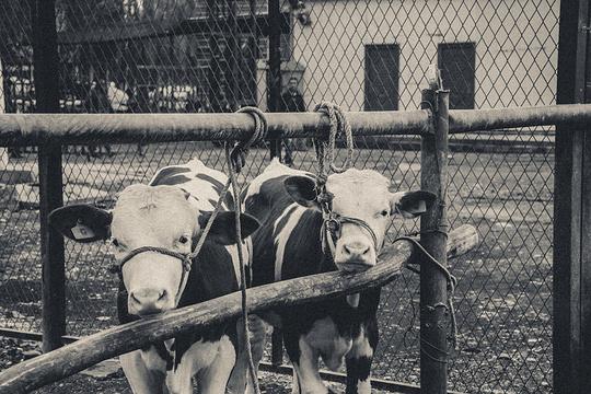 牛羊大巴扎旅游景点图片