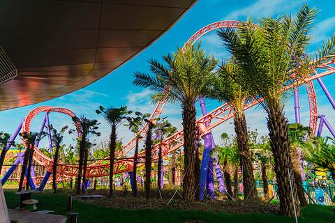 上海海昌海洋公园的图片
