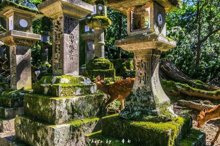 """""""参道走到尽头,就会看到台阶之上的 春日 大社 ,朱红的大门,门两旁依旧是几千座的石头灯笼,寂静、古朴_春日大社""""的评论图片"""