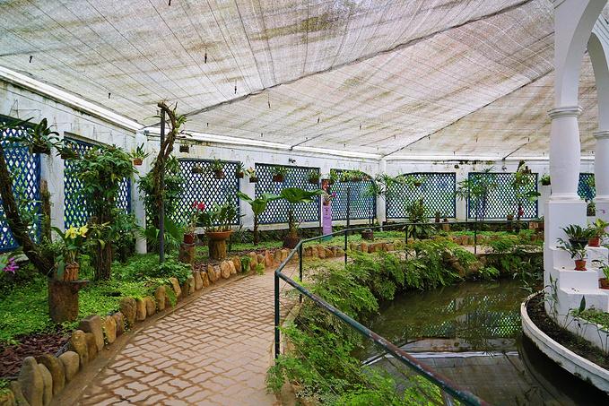 Jardim Botânico植物园图片