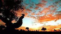 阿拉善盟旅游景点攻略图片