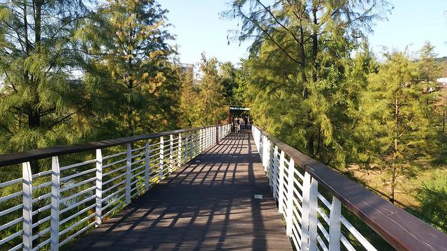 大观湿地公园旅游景点图片