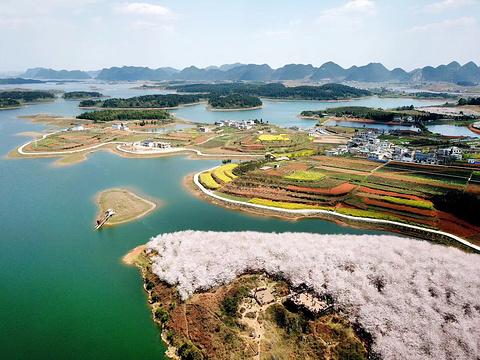 平坝农场樱花园旅游景点图片