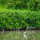 淡水河红树林自然保留区