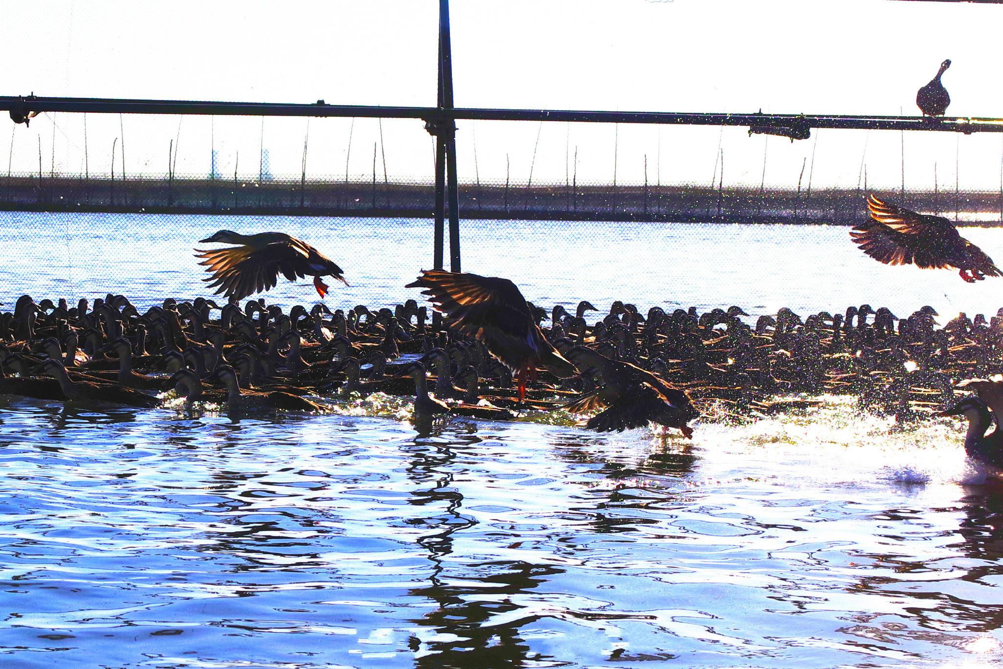 在水一方·高邮湖芦苇荡湿地公园