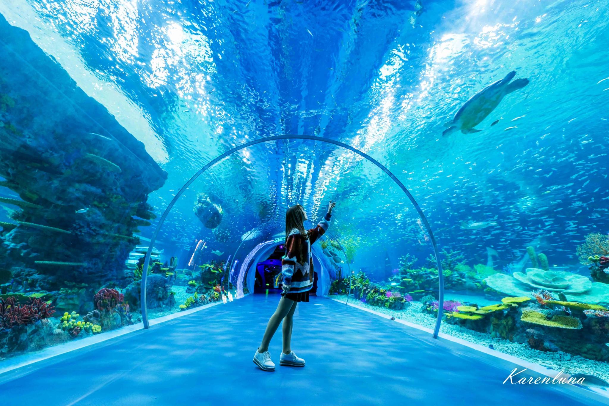 【上海海昌海洋公园】放飞在蓝色的神奇世界里
