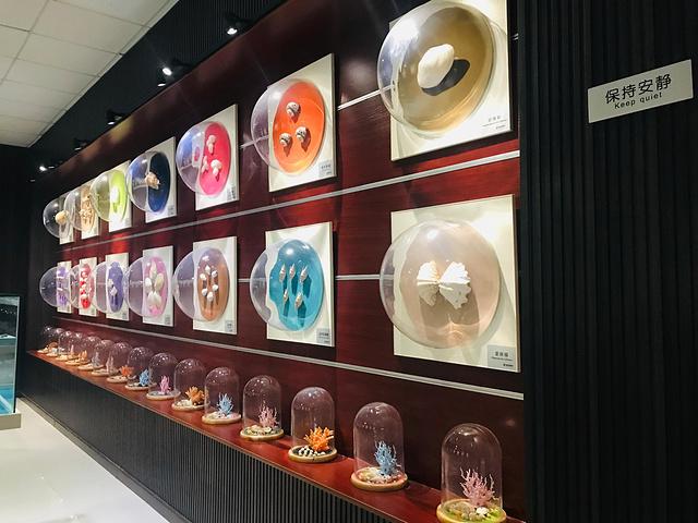 """""""青岛最爱景点之三,来这里可以欣赏到各式各样的贝壳和它的工艺品,最重要的是,一定要听博物馆小哥哥..._贝壳博物馆""""的评论图片"""