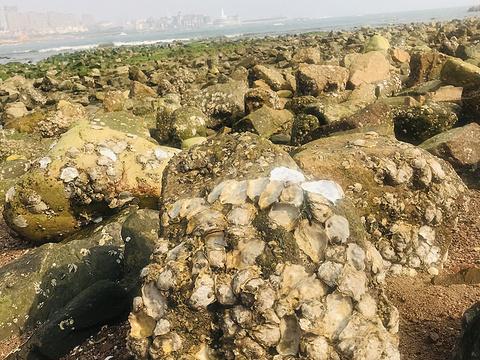 小麦岛旅游景点图片