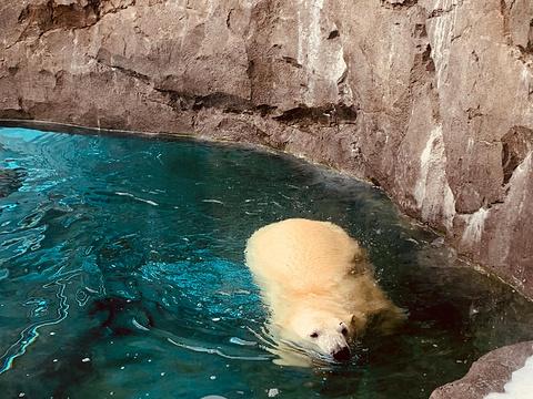 札幌市圆山动物园旅游景点图片