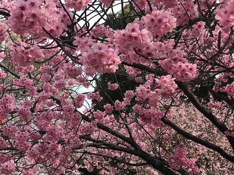上野公园旅游景点攻略图