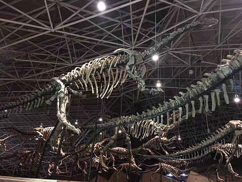 世界恐龙谷恐龙遗址公园旅游景点攻略图