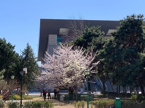 中国人民大学旅游景点图片