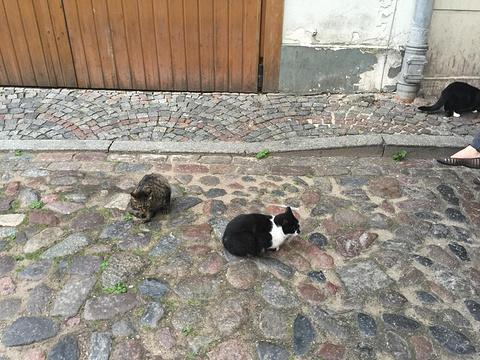 里维广场和猫宅旅游景点攻略图